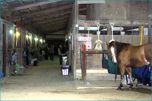 Red Barn Arena Horse Boarding